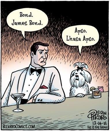 Dog Joke